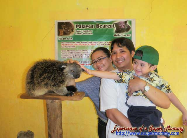touching palawan bearcat