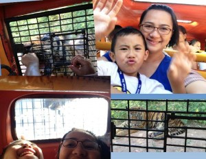 Zoobic Safari Adventure