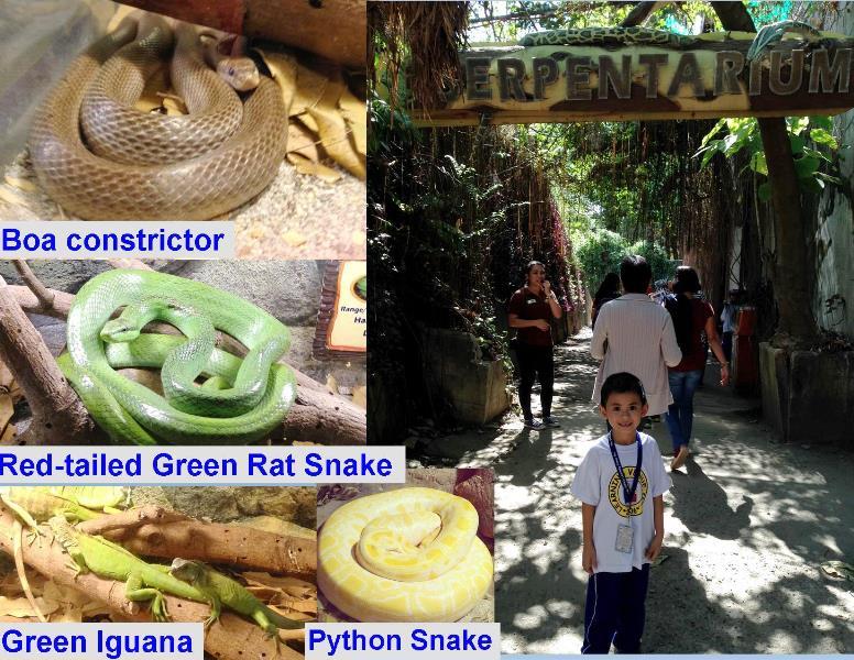 Zoobic-Safari-Serpentarium