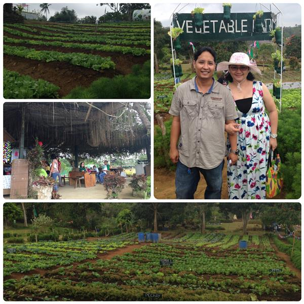 Paradizoo Vegetable Farm